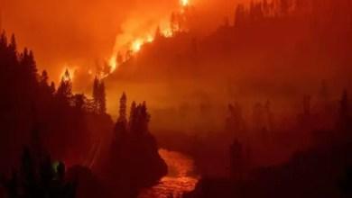 Photo of أمريكا : حريق غابات جديد في شمال كاليفورنيا