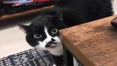 صورة قط موهوب بالغناء يثير ضجة على مواقع التواصل ( فيديو )
