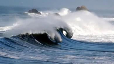 Photo of في نيوزيلندا .. صياد ينقذ رضيعاً ظنه دمية جرفتها الأمواج