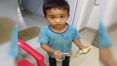 Photo of طفل هندي يدهس بالخطأ فرخ دجاج و يهرع به إلى المستشفى