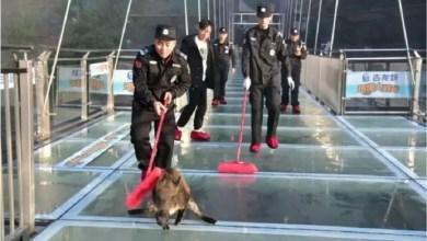 Photo of هونغ كونغ : خنزير بري يهاجم الركاب في محطة مترو و يصيب امرأة !