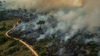 "Photo of غابات "" أمازون "" الاستوائية تواجه خطر الشح في الأمطار !"