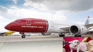 Photo of تأخير رحلة جوية نرويجية بسبب شعور كلاب بالحزن !