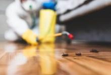 Photo of المبيد الحشري وحده ليس كافياً .. إليك كيفية التخلص من الصراصير في المنزل