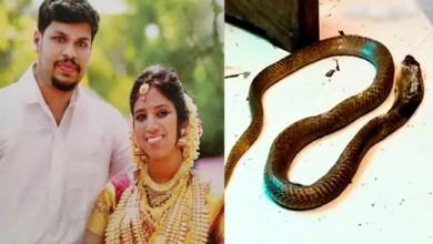Photo of بعد إخفاق الثعبان .. هندي يقتل زوجته بأفعى كوبرا
