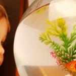 Akvariumas vaikas