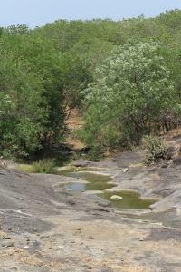 Nature en Inde, Nature in India