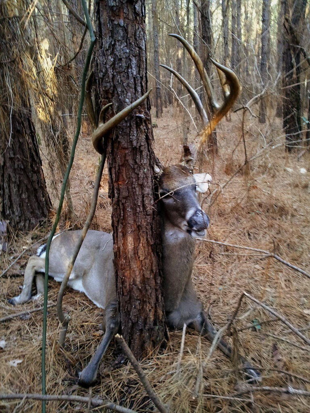mobile deer hunter kenny redd topples