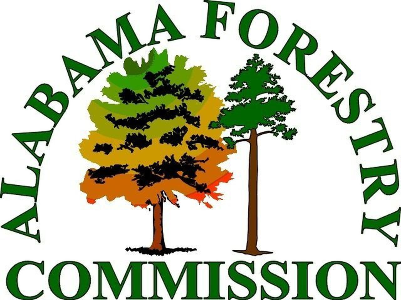 Read the latest trees and woodlands news from across merseyside and n.cheshire, from tree planting triumphs to ways you can get involved. Alabama Forestry Commission Firefighters Return From Fighting Fires In Washinton Al Com