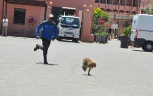 مراكش: قرد بساحة جامع الفنا يعتدي على سائح أجنبي