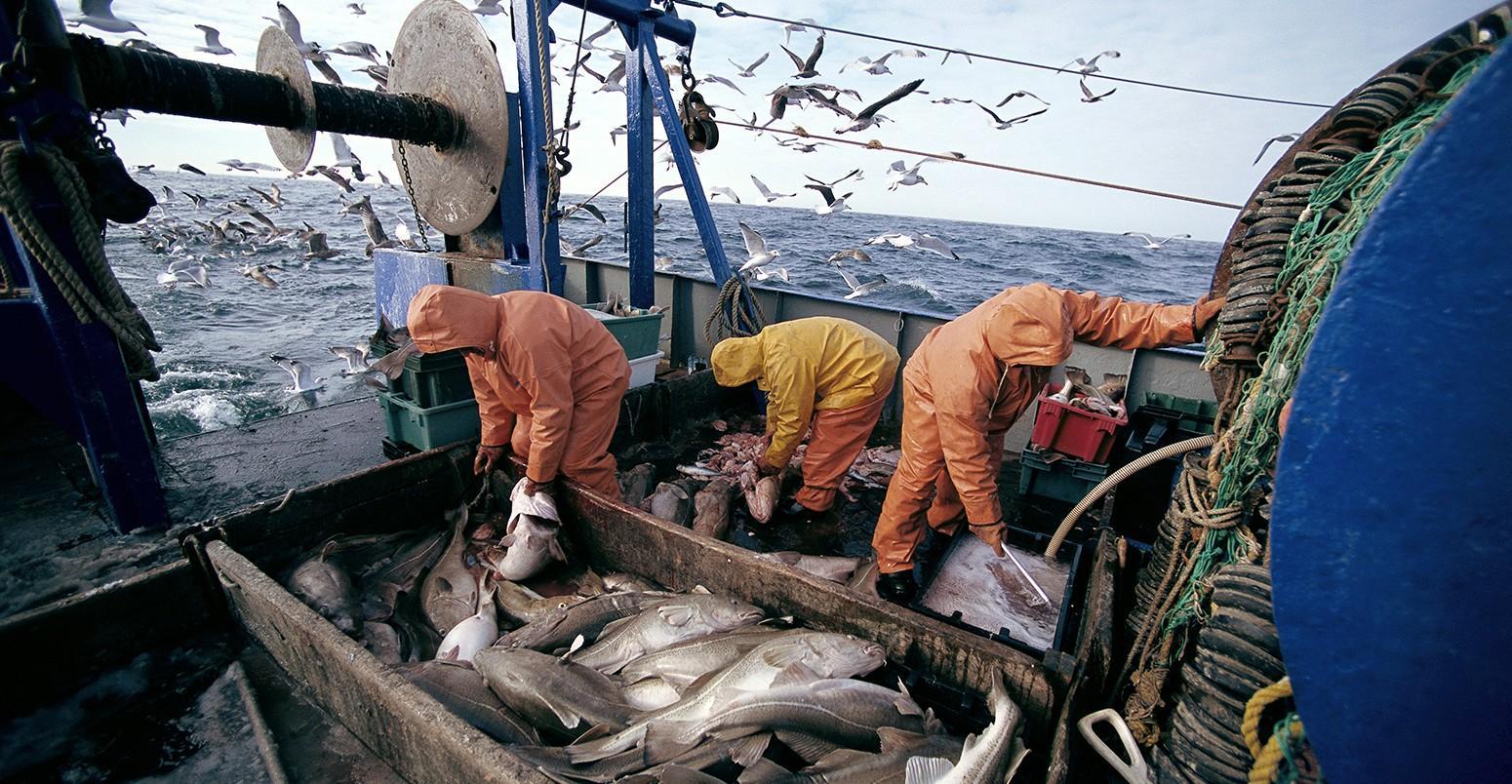 فاعلون اقتصاديون فرنسيون يستكشفون مؤهلات الصيد البحري بالأقاليم الجنوبية للمملكة
