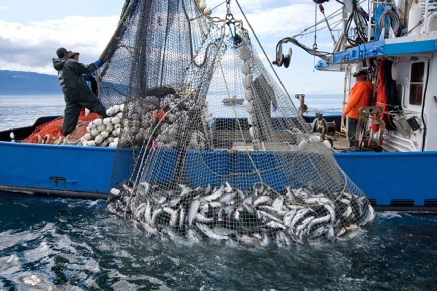 ميناء آسفي يتصدر موانئ المغرب الأبرز في الصيد البحري والمنتجات السمكية