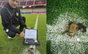 """""""الكاف"""" يحقق بخصوص واقعة """"السحر الأسود"""" في مباراة زيمبابوي والكاميرون"""
