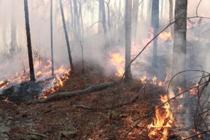 A look at the controlled burn near Smith Mountain on Lake Martin to help restore the longleaf pine. (Phil Free/Alabama NewsCenter)