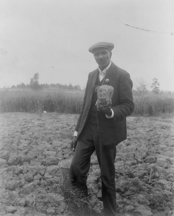 Dr. George Washington Carver stands in a field, probably at Tuskegee, holding soil. Carver did important work to help farmers working in cotton-depleted soil diversify their crops and improve their fortunes. (Library of Congress Prints and Photographs Division)