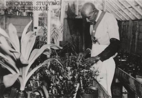Dr. George Washington Carver conducts research on plant diseases at Tuskegee University. (Alabama Department of Archives and History)