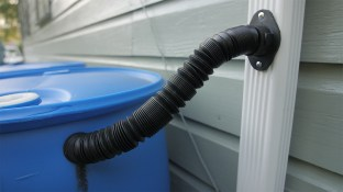 Rainwater is transported from a downspout into rain barrels. (Dennis Washington / Alabama NewsCenter)