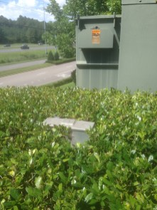 Vegetation planted near electric meters often makes them difficult for power specialists to access. (contributed)