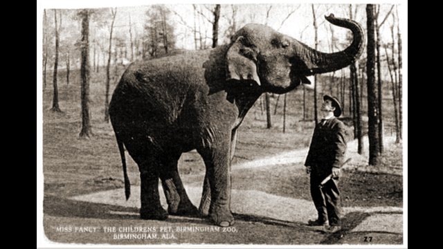 On this day in Alabama history: Avondale Zoo's show-stopper elephant was born