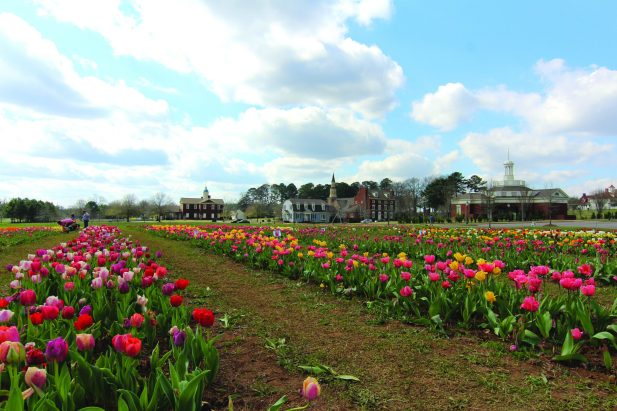 American Village is celebrating its 20th anniversary Monday, which includes Washington's Birthday and the opening of the fourth annual Festival of Tulips. (contributed)
