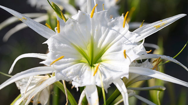 Get into the swing of spring with Can't Miss Alabama and the virtual Cahaba Lily Festival