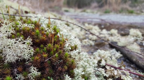 Species that can survive harsh environments flourish at Flat Rock Park. (Katie Horton)