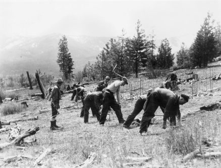 Men plant trees during a Civilian Conservation Corps (CCC) project on the Nett Lake Reservation in Minnesota. (Photo by MPI/Getty Images)