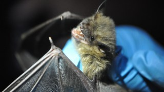 Alabama Power, Southern Company support research to fight bat-killing disease