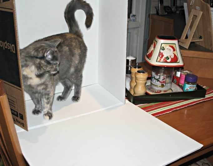 Disobedient cat