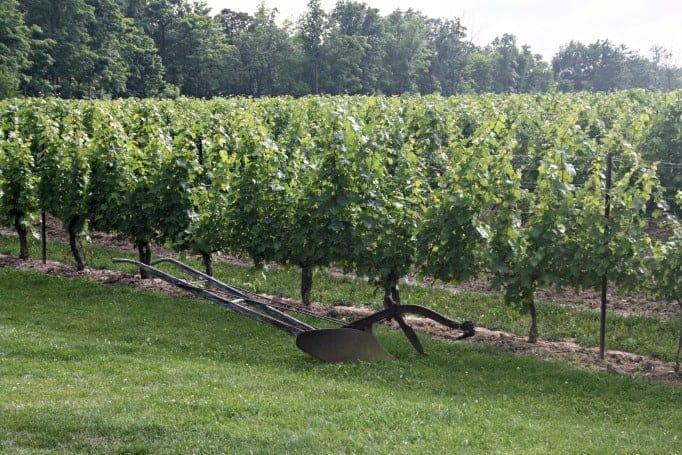 Tawse Winery, Vines at Tawse