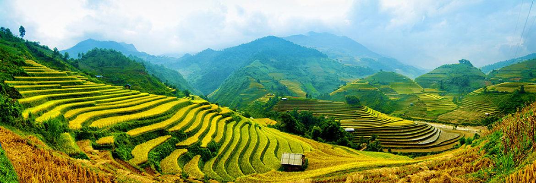 Rizière vietnamienne