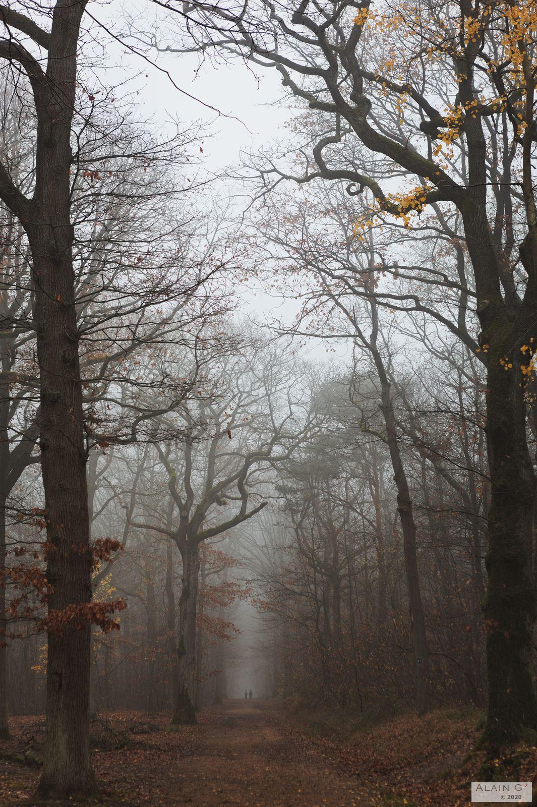 Forêt de Verrières, 2020