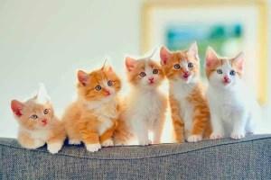 بالفيديو : شاهد مواقف مضحكة لـ قطط يلعبون