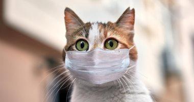 Photo of روسيا تُعلن تسجيل أول إصابة بسلالة كورونا الجديدة بين القطط