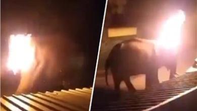 Photo of فيديو مرعب.. اشتعال النيران في «فيل» بالهند يثير غضب السوشيال ميديا