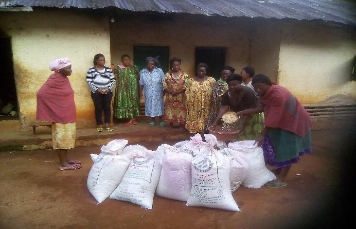 Notizie dal Cameroun: Progetto Agricoltura e Tecnologia