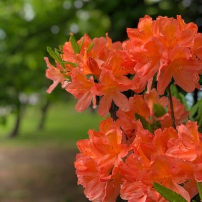 A photograph of beautiful ornage flowers