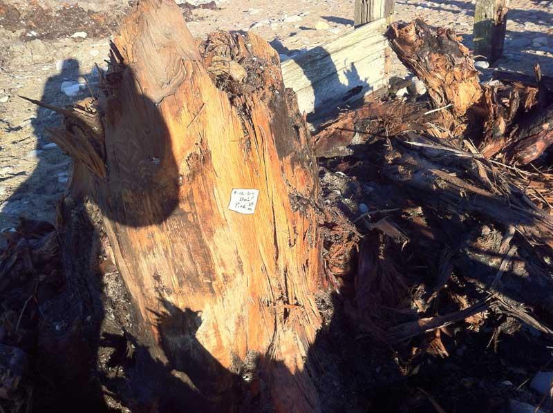 Labelled Stumps