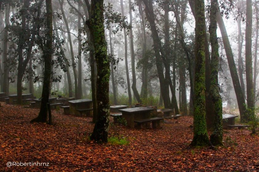Un pequeño lugar escondido en el bosque