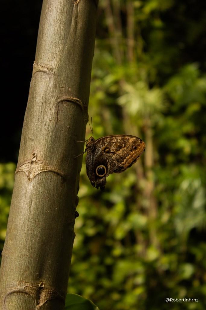 La historia de una pequeña mariposa