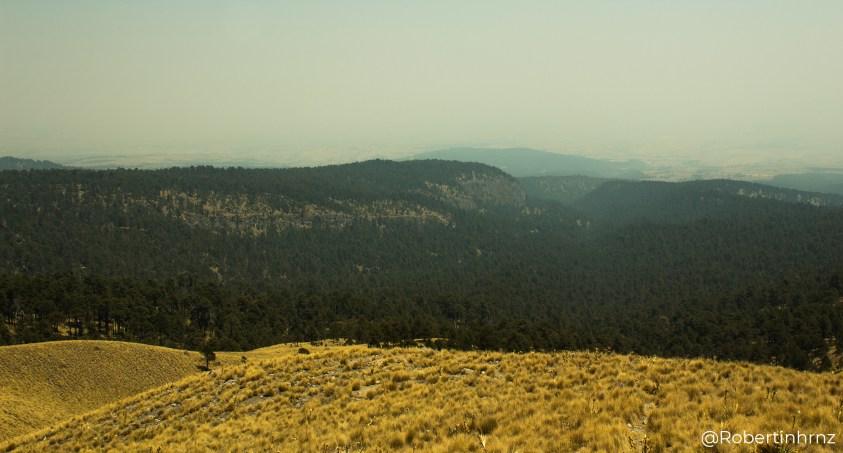 Tarde en el bosque del Nevado de Toluca