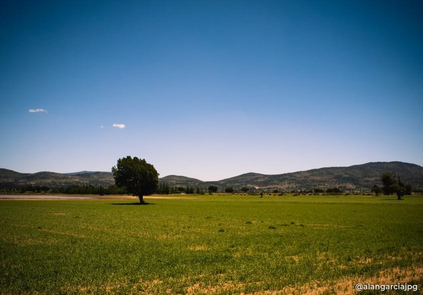 Verde campo que apenas germina en Apan, Hidalgo