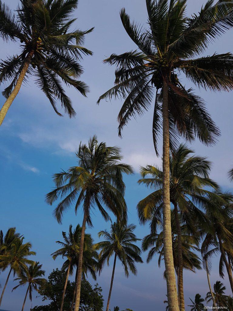Palmeras en Chaparrales, la playa desconocida de Veracruz