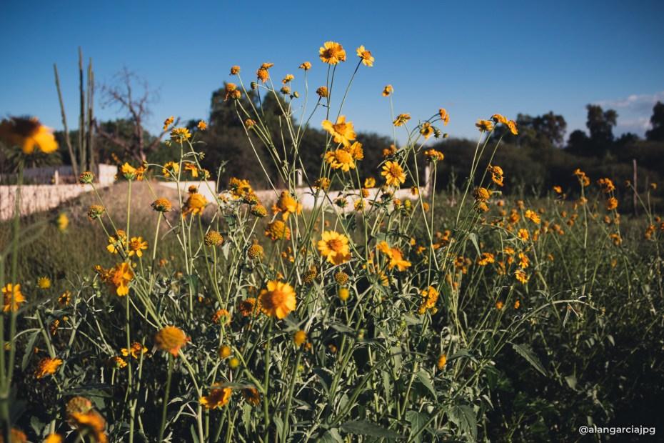 Diminutas flores amarillas, un mundo lleno de vida.