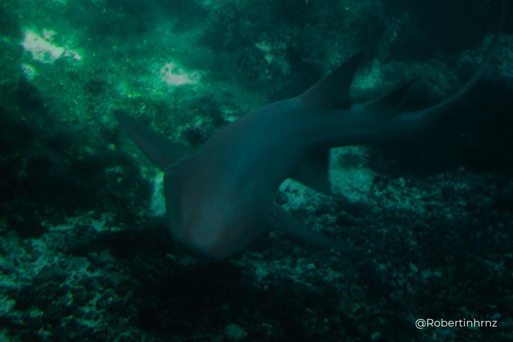 Tiburón que se mueve rápido en un acuario.