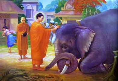 Animals in Buddhism - Alan Peto