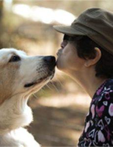 Animal Care and Adoption