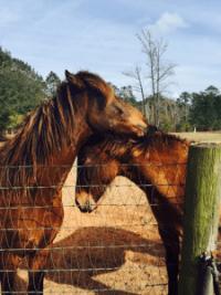 Horsephoto3143