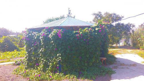гостевой двор камышовая бухта (23)