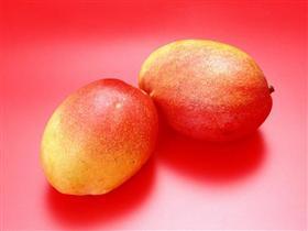 Antalyalı heyet Florida'ya mango için geliyor